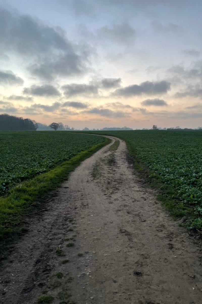 Zwischen Feldern